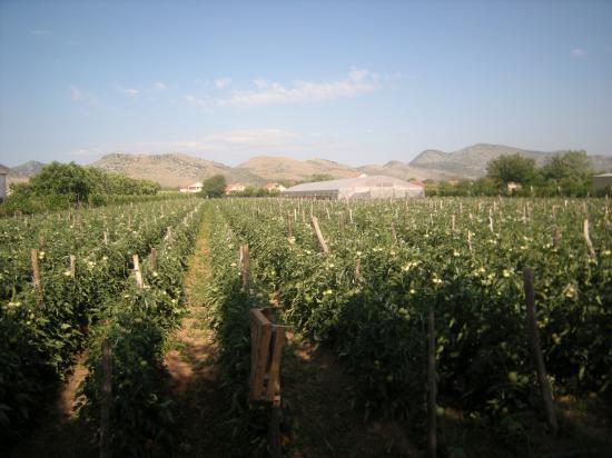 Letnji obilasci proizvođača – Crna Gora 2011