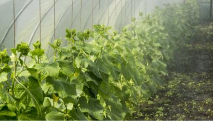 Zaštita povrća u fazi ukorenjavanja