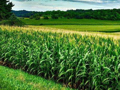 Za proizvođače kukuruza koji vole jednostavna rešenja za ozbiljne probleme